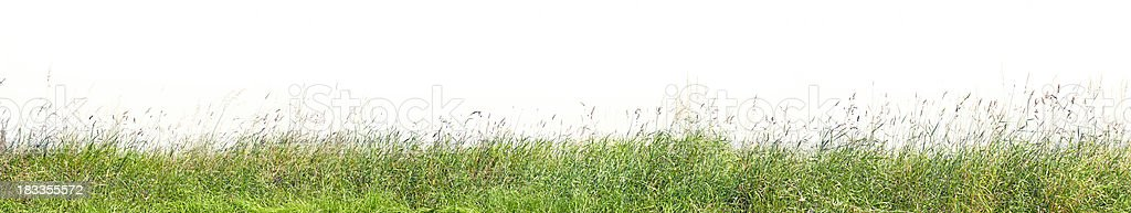 Grass profile isolated on white, high resolution image. stock photo
