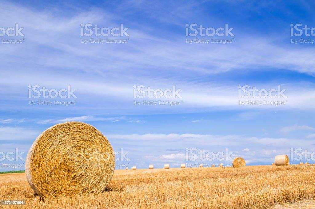 Grass Roll Biei Hokkaido Japan stock photo