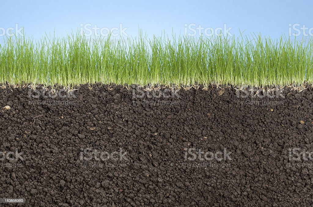 grass roots, stock photo