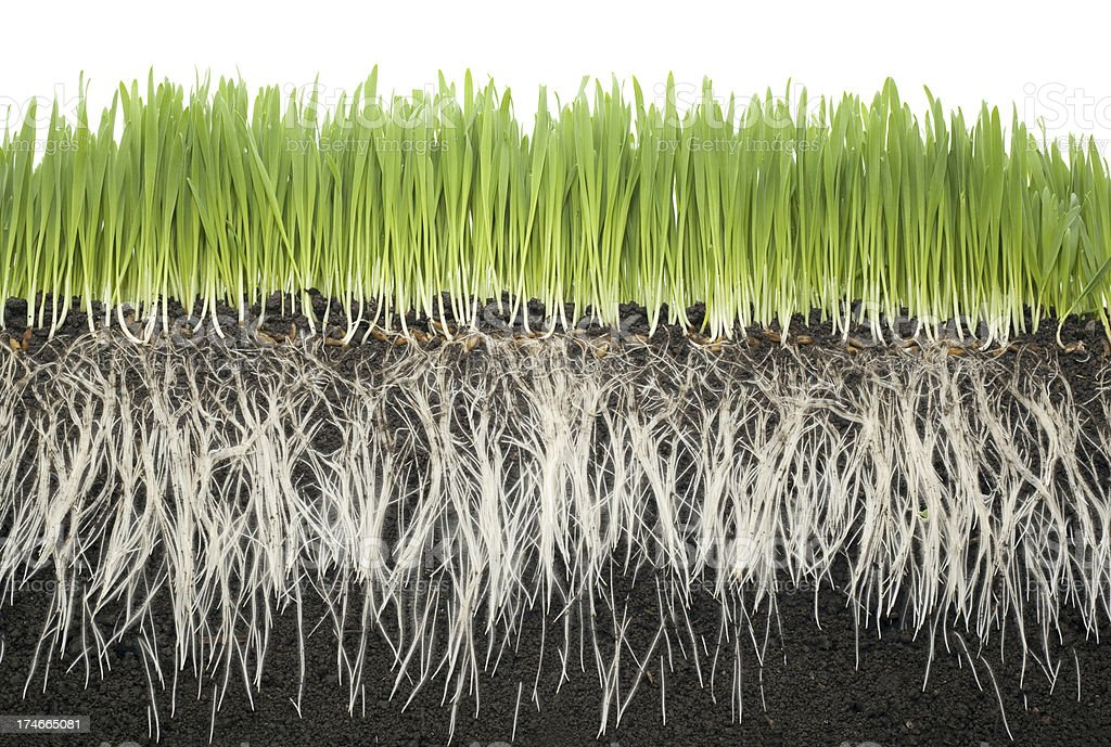 grass roots soil stock photo