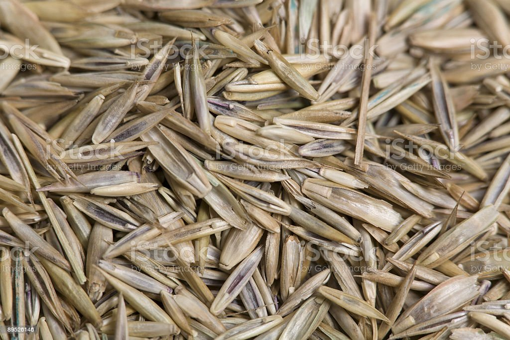 Grass Seed Close-up royalty-free stock photo