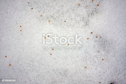 639394370 istock photo grass seed on white snow 876998590