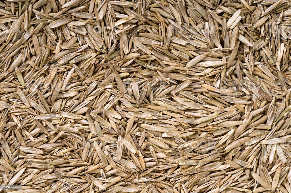 Grass seed royalty-free stock photo