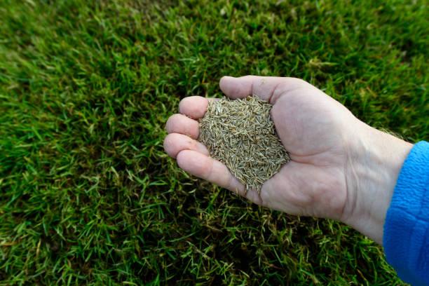 Gras aus Samen – Foto