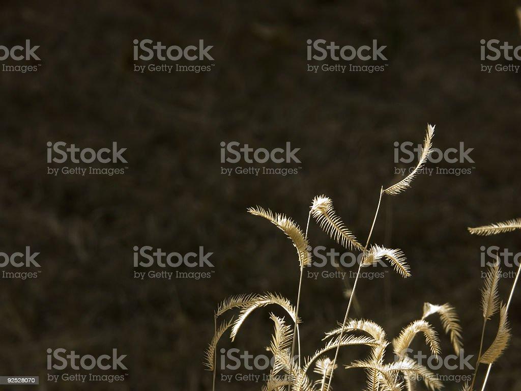 Grass seeds stock photo