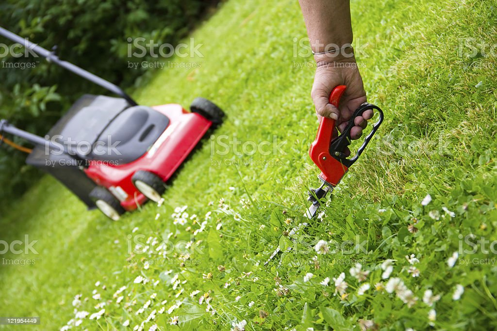 grass shears and lawn mower stock photo