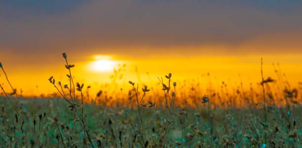 Grass Silhouette awe orange fire sunset background stock photo