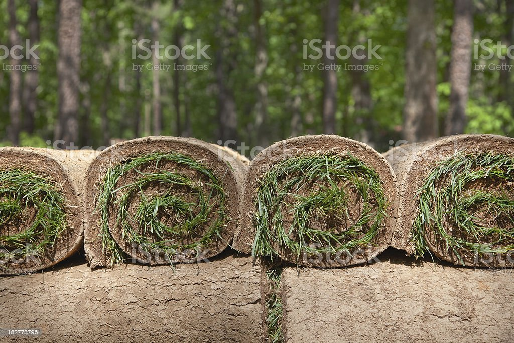 Grass Sod Rolls Stacked royalty-free stock photo