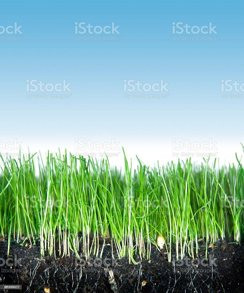 Gleby, trawy i niebo - Zbiór zdjęć royalty-free (Bez ludzi)