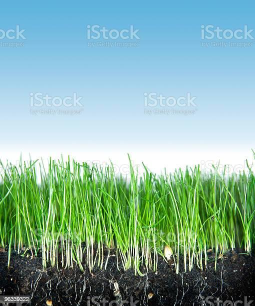 Gleby Trawy I Niebo - zdjęcia stockowe i więcej obrazów Bez ludzi