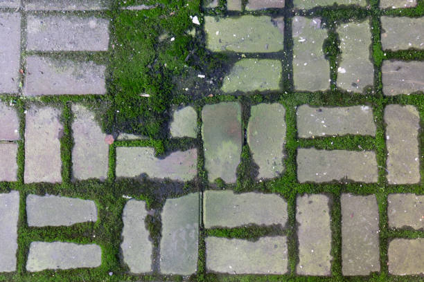 Royalty Free Moss Patio Footpath Tiled Floor Pictures Images And