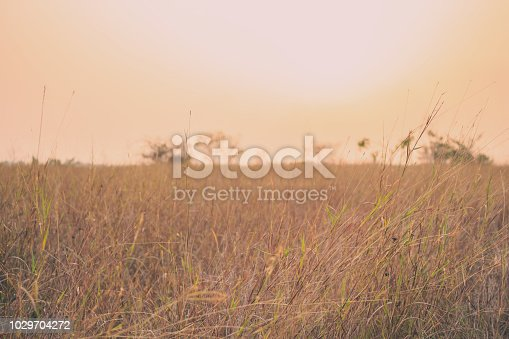 grass summer vintage nature background