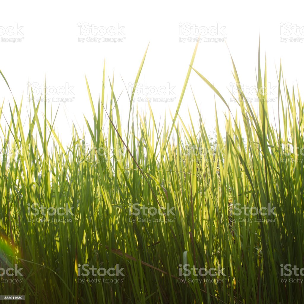 Grass, Sunny day stock photo