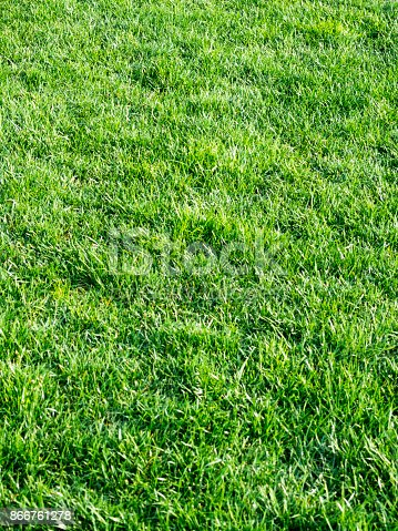 istock Grass texture background 866761278