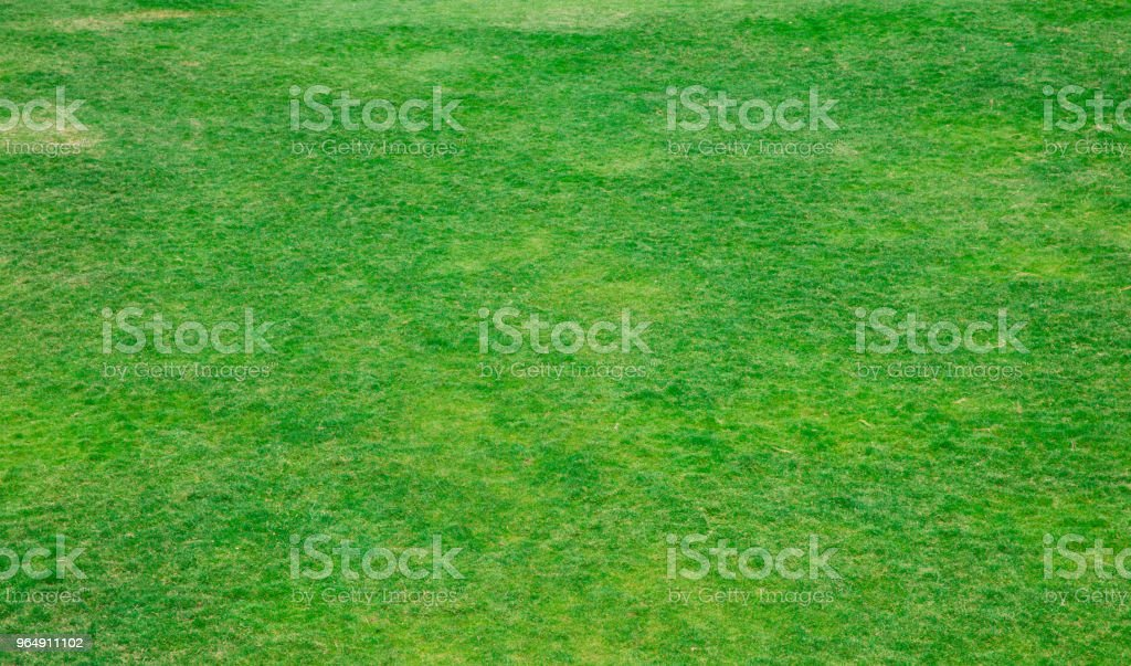 grass texture from a field royalty-free stock photo