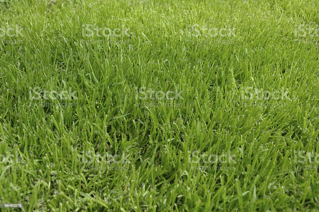 Grass texture, in the garden royalty-free stock photo