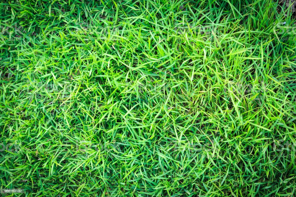 Grass texture or grass background. green grass for golf course, soccer field or sports background concept design. Natural green grass. - Стоковые фото Абстрактный роялти-фри