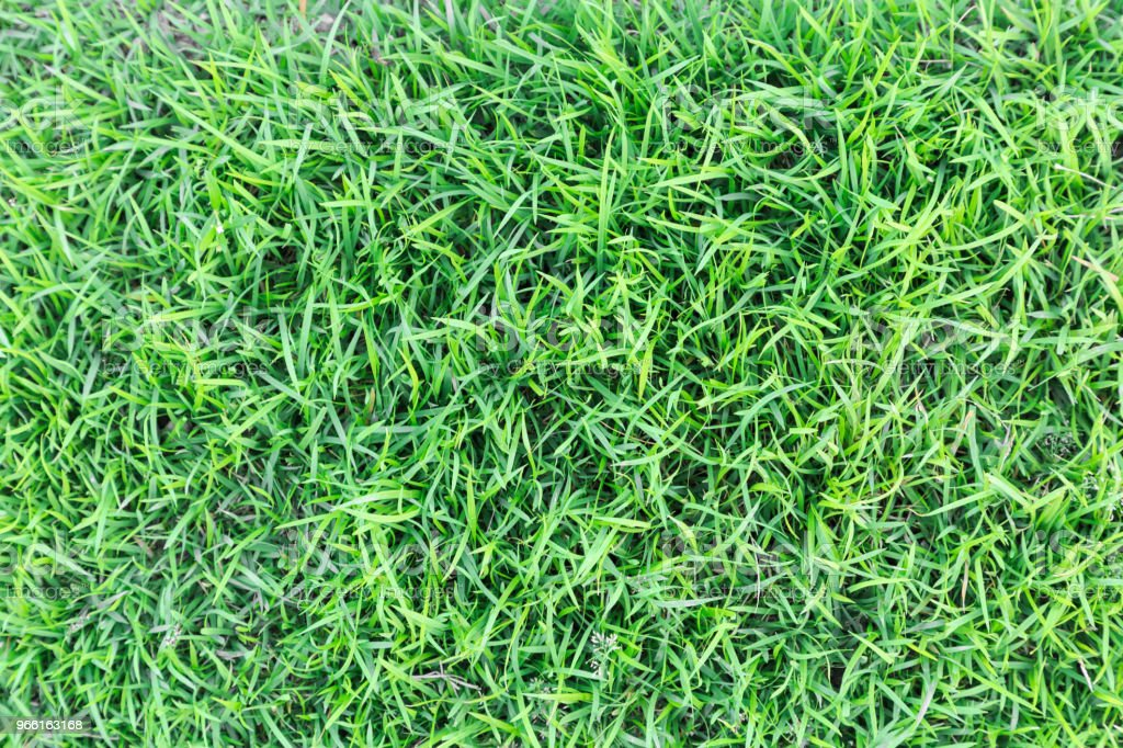 Grass texture or grass background. green grass for golf course, soccer field or sports background concept design. Natural green grass. - Foto stock royalty-free di Ambientazione esterna
