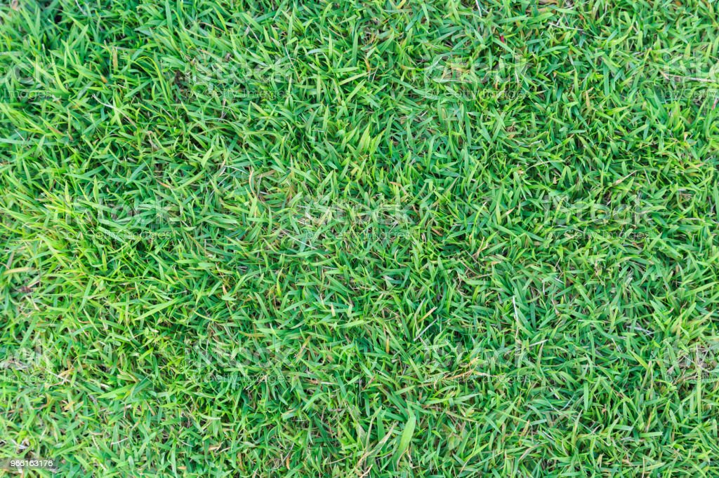 Grass texture or grass background. green grass for golf course, soccer field or sports background concept design. Natural green grass. - Royalty-free Abstrato Foto de stock