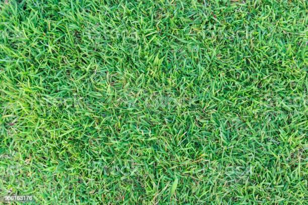 Grass Texture Or Grass Background Green Grass For Golf Course Soccer Field Or Sports Background Concept Design Natural Green Grass - Fotografias de stock e mais imagens de Abstrato