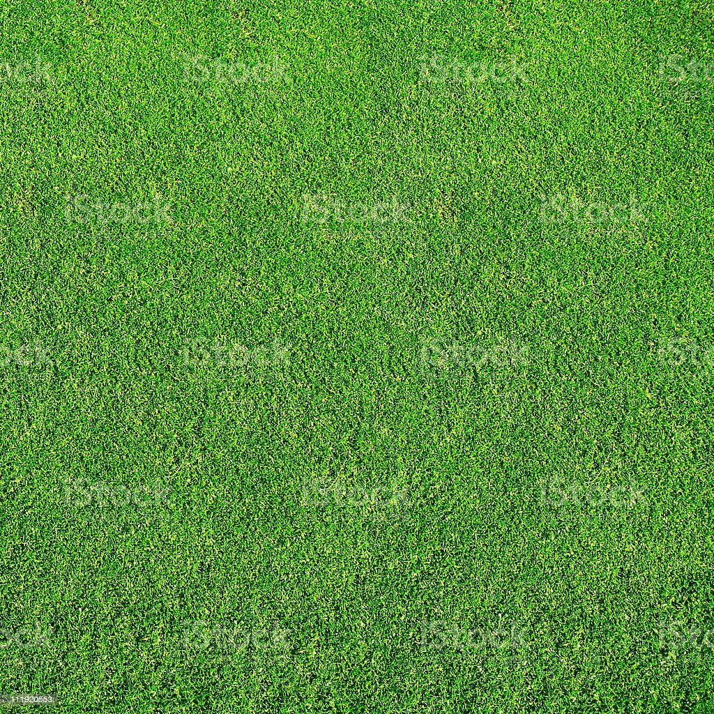 Grass texture stock photo