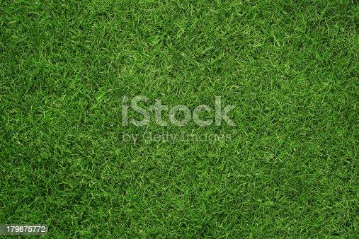 istock Grass texture 179675772