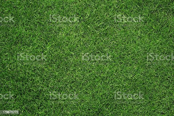 Grass texture picture id179675772?b=1&k=6&m=179675772&s=612x612&h=s46rzj  f qmbnohukdx5k88h7s1ghtzlwp nka616k=