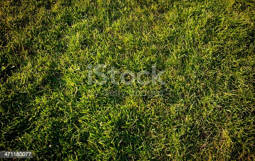 Lush green grass in Ireland. Taken with Canon 1Ds Mark III