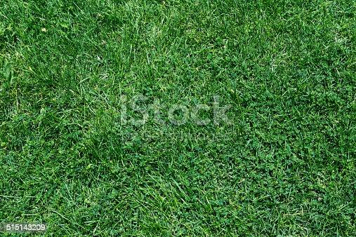istock Grass texture 515143209