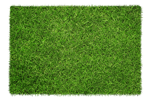 Close up of green grass texture, background isolated on white background with copy space