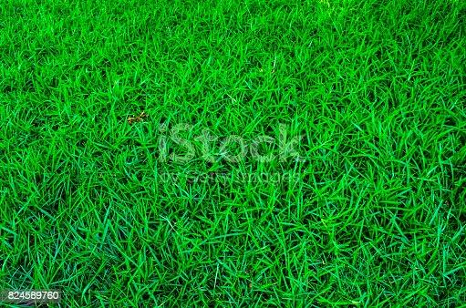 istock Grass texture 824589760