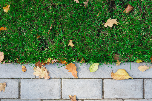 Grass texture with border, walkway outdoors
