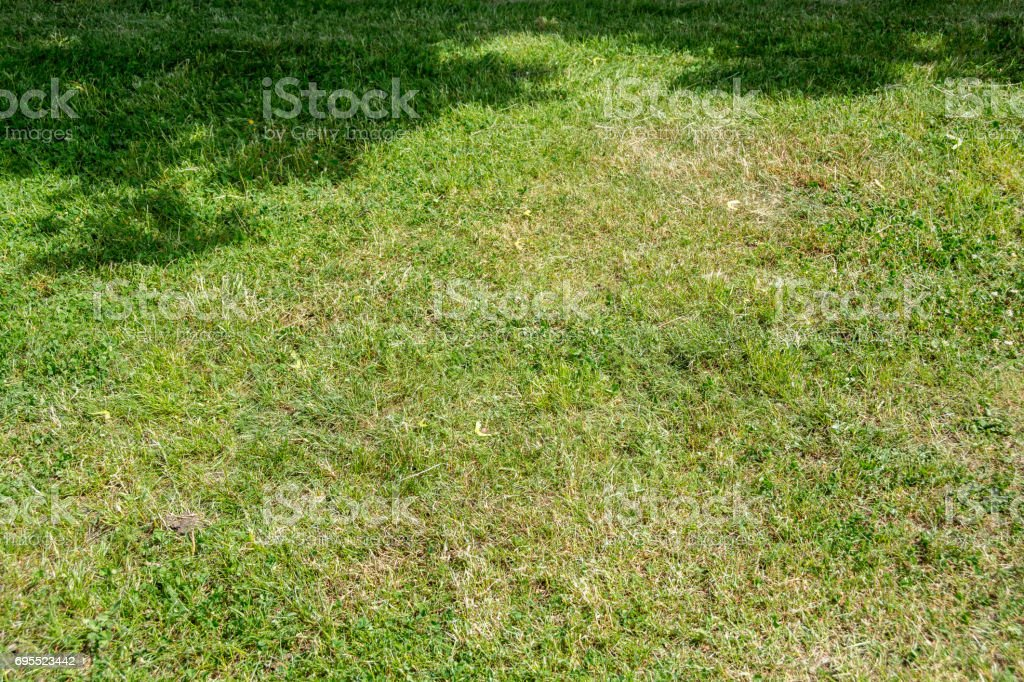 Grass texture with shadow of a tree stock photo
