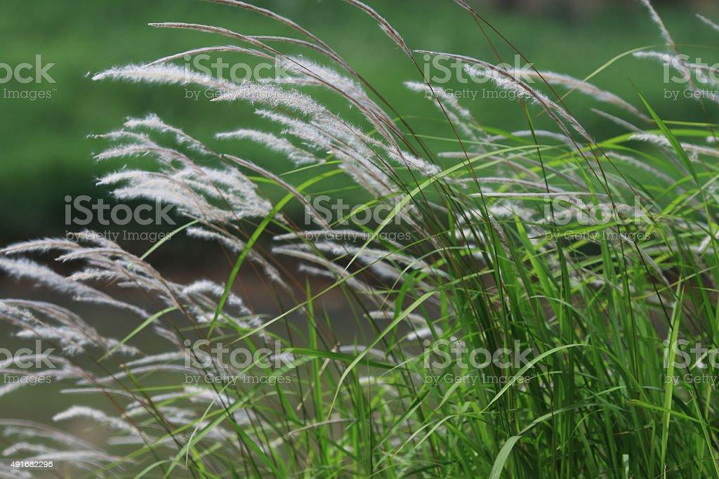 grass thatch stock photo
