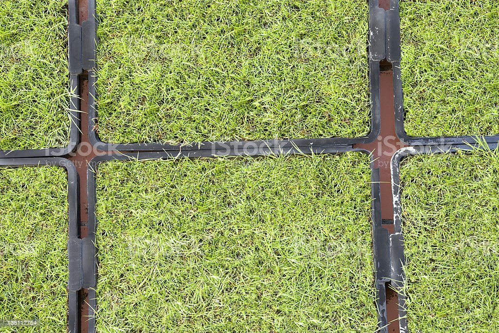 Grass  trays seedbed royalty-free stock photo
