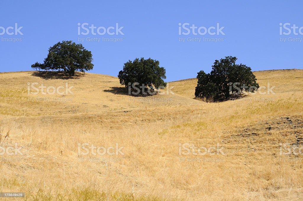 Grass, trees, sky stock photo