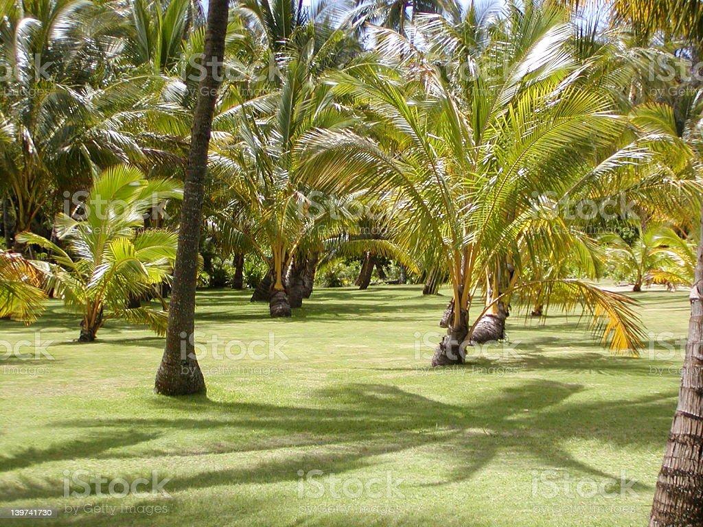 Grass under the palms stock photo