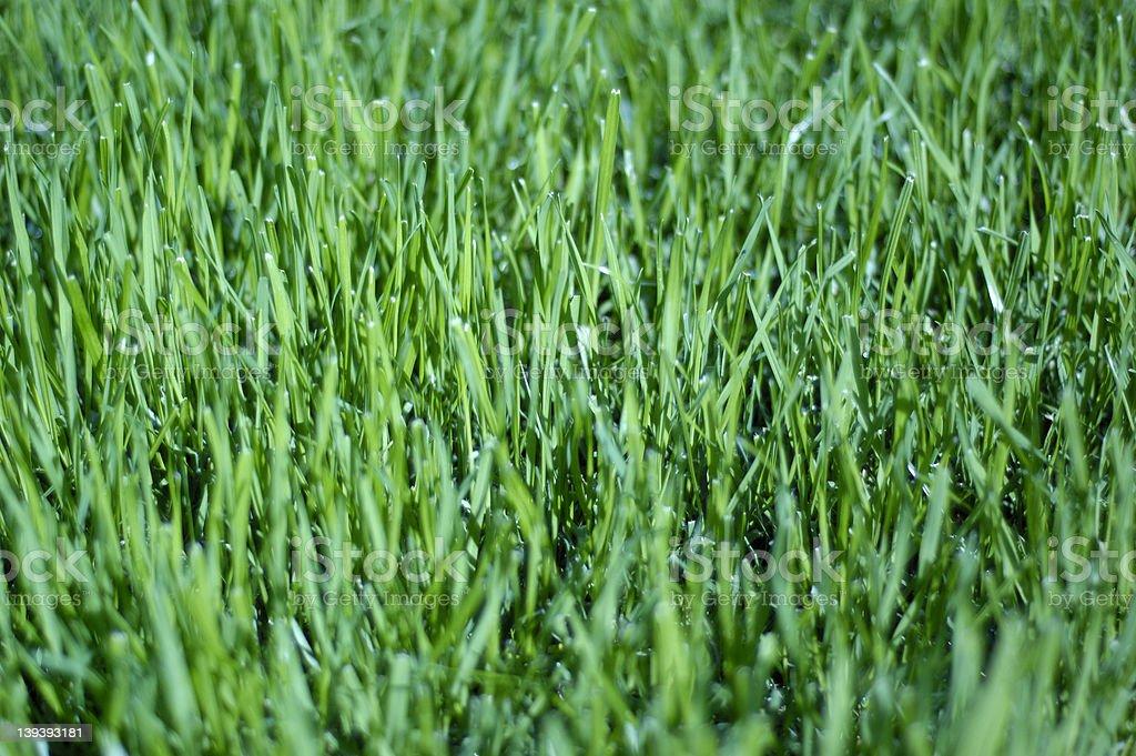 Grass up close royalty-free stock photo