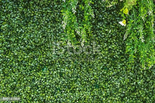 grass wall backdrop for decorate in wedding background photo stock
