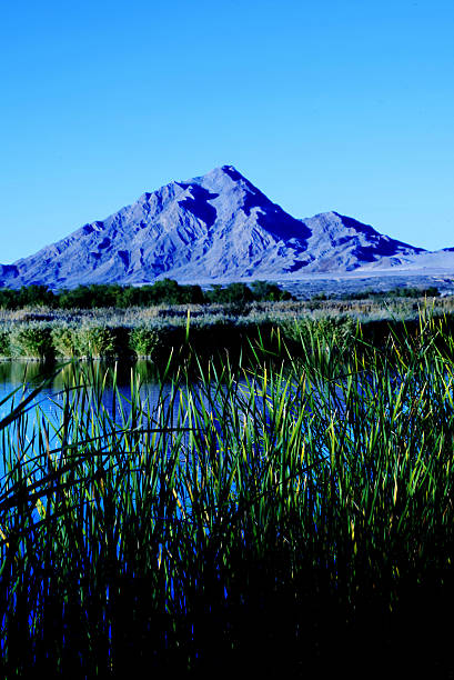Grass, Water, and a Mountain, Wetlands Park, Las Vegas, Nevada stock photo