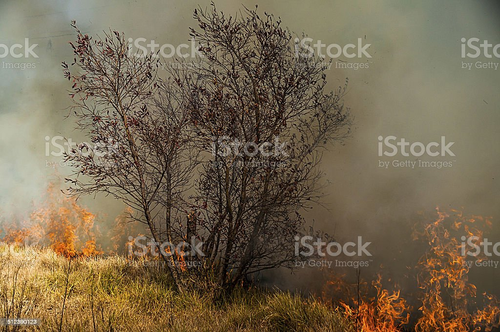 Grass Wild Fire royalty-free stock photo