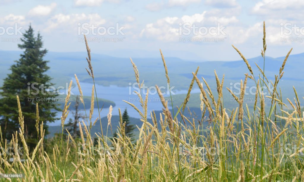 Grass with a view stock photo