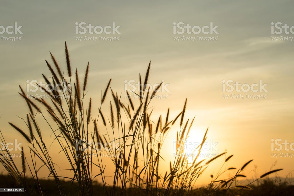 Grass with a warm light in the morning. stock photo