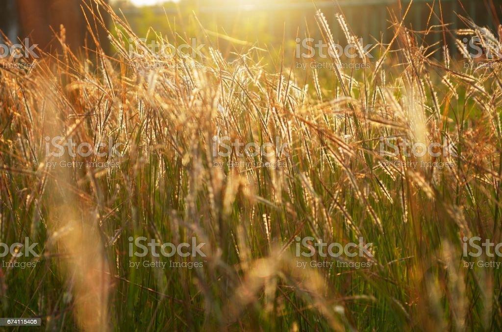 草帶背光 免版稅 stock photo