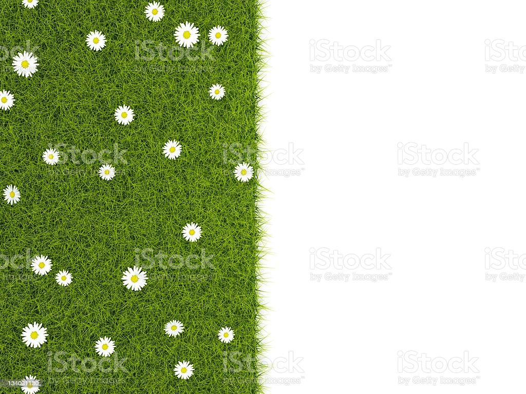 Grass with camomiles royalty-free stock photo