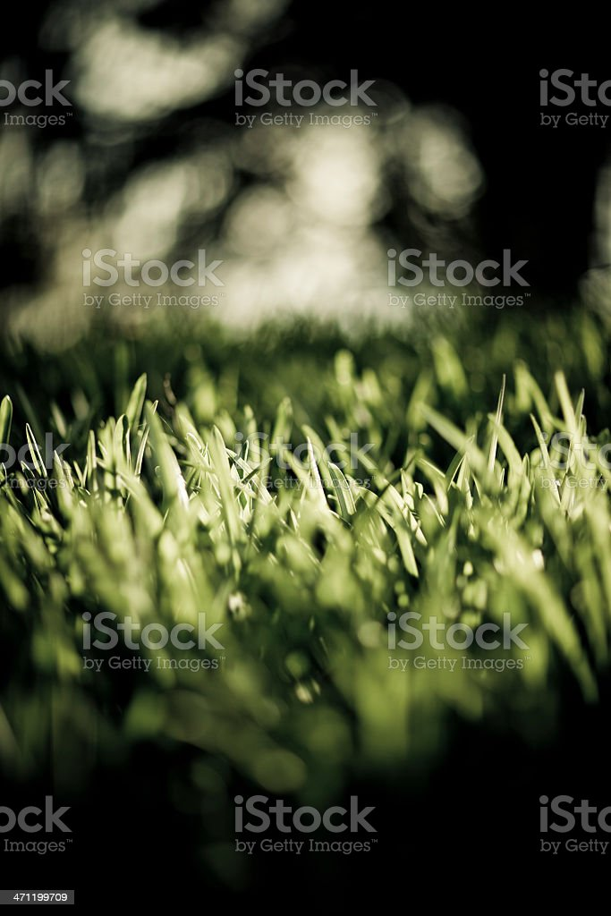 grass with depth of field royalty-free stock photo