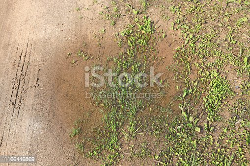 Grass with dew drops in a puddle on a dirt road