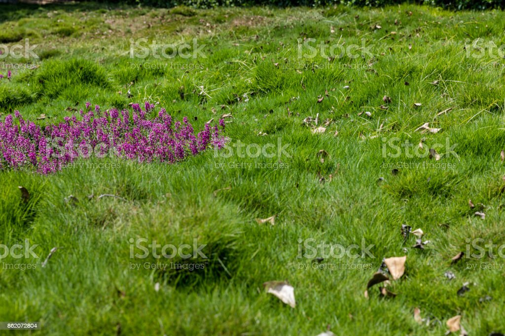 Grass with flowers patch stock photo