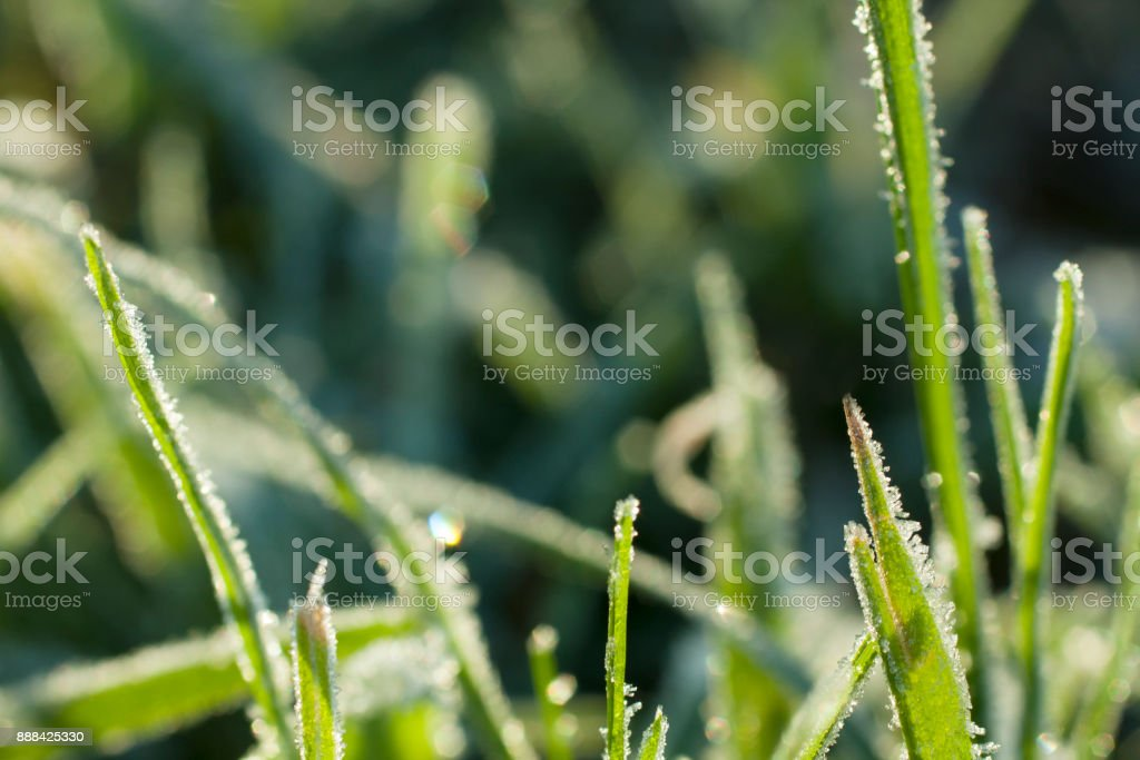 Grass with frozen edges close up. stock photo