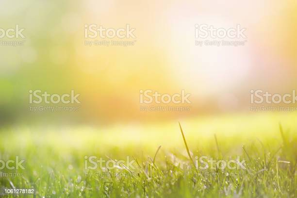 Photo of Grass with green blurry background in the morning